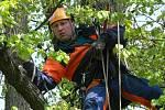 Na besedě v parku mohli návštěvníci vidět i ošetřování stromů.