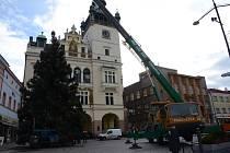 Vánoční strom na Masarykově náměstí v Náchodě.
