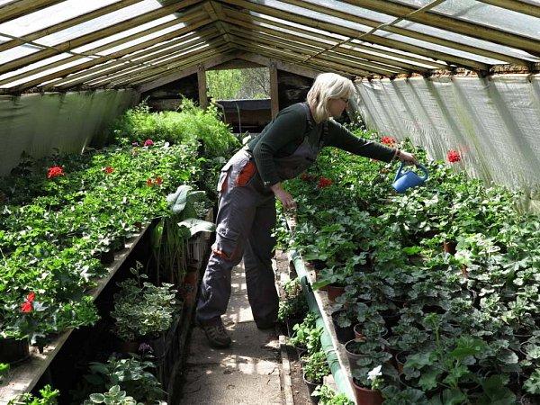 Prací městských zahradníků není pouze výsadba nových květin, ale také jejich každodenní zalévání a příprava květnové výzdoby pro různé akce pořádané městem.
