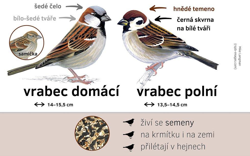 20. březen je Světový den vrabců.