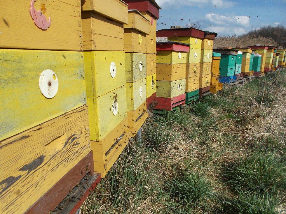 Nákup místního medu je totiž to nejlepší, co se dá udělat pro přírodu. Jednak spotřebitel přesně ví, od koho med kupuje a z jakého konkrétního místa. Může si za lžičkou medu představit konkrétního včelaře. A navíc tak lidé podporují chov včel v místě svéh