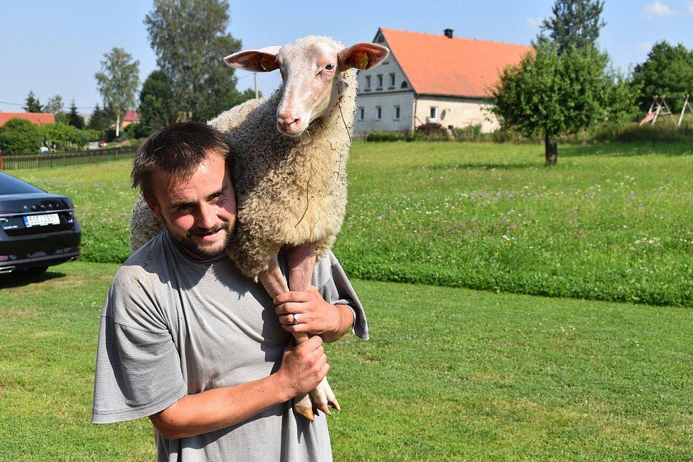 Seznamovaní s novým prostředím vzaly ovce důkladně a vyrazily na krátký výlet po vesnici. Za chvíli ale byly chyceny a vrátily se zpět do nového domova.