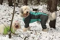 Osobně bych je radši neoblékala, když jdeme takto, raději to obcházíme mimo civilizaci? Ale lepší, než rozmrazovat ty koule sněhu.