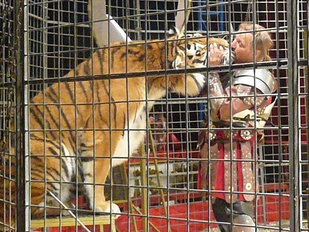 Cirkus Jo-Joo rozbalil svůj stan u Kauflandu v Náchodě.