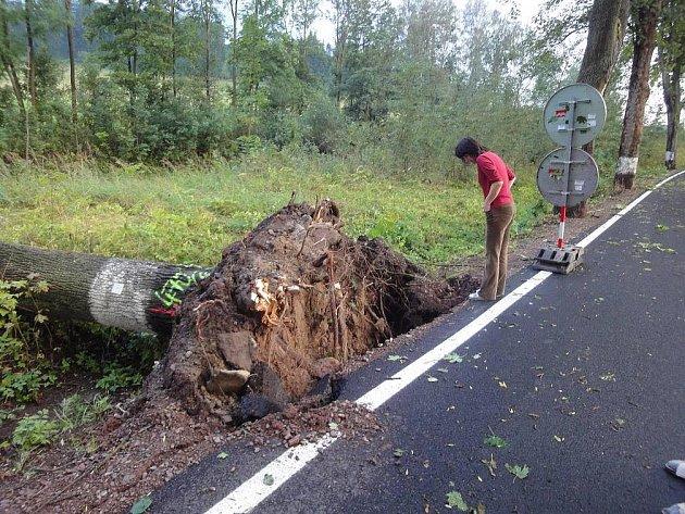 Krátkou, ale intenzivní bouřku odskákaly i stromy u opravené silnice mezi Bohdašínem a Březovou.