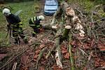 V obci Vršovka nedaleko Nového Města nad Metují spadl vzrostlý strom na dům, poškodil i zaparkovaný automobil.