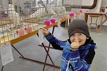 48. Podorlická výstava a okresní soutěž drůbeže, králíků, holubů i okrasného ptactva v Novém Městě nad Metují.