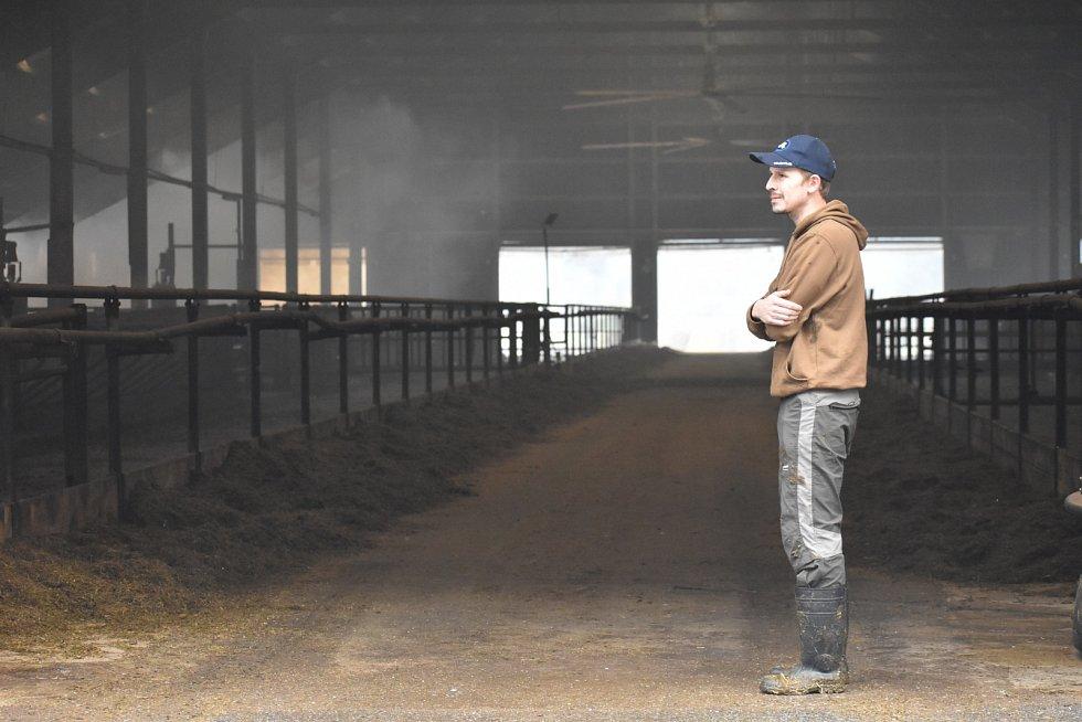 Čtyři stovky krav se se při požáru muselo evakuovat. Prázdná stáj naštěstí žádnou újmu neutrpěla a po pár hodinách se krávy mohly vrátit do svého.
