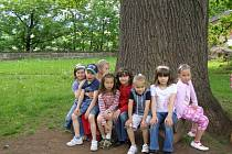 Do soutěže Strom roku 2009 ho přihlásila učitelka Jindra Hajpišlová a žáci 1. B  (na snímku) společně s ostatními žáky prvního stupně ZŠ Hradební v Broumově.