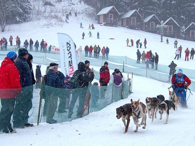 Závody psích spřežení na Janovičkách byly letos ve znamení zimy.