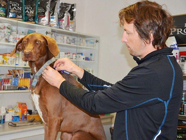 Veterinární lékař Tomáš Strnad aplikuje čip svému psovi.