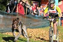 17. ročník evropského poháru závodů psích spřežení BONO 2012 v areálu kempu Brodský u Červeného Kostelce.
