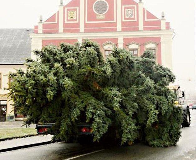 Z Mandžurska na náměstí. Vánoční strom se blíží k místu před polickou radnici, kde nyní stojí