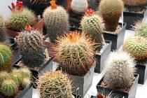 Výstava zajímavých kaktusů a sukulentů v Polici nad Metují.