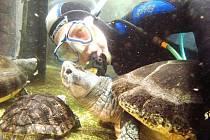 POD HLADINOU akvárií a tropické řeky v zoologické zahradě.