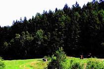 Lesy.
