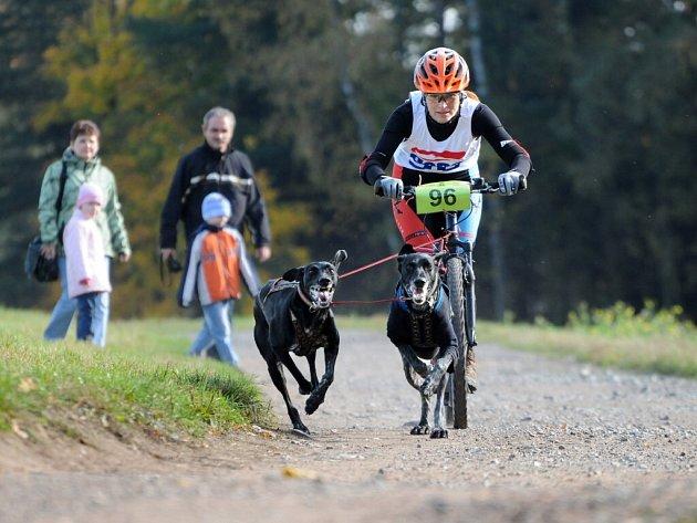 NA OSMNÁCTÝ ROČNÍK evropského poháru závodů psích spřežení přijela stovka musherů a téměř tři stovky psů.