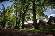 Na bývalém obranném valu u zámku v Novém Městě nad Metují se v květnu nově pro veřejnost otevřela obnovená zámecká lipová alej. V jejím prostoru byla restaurována socha sv. Václava a vznikly nové mlatové cestičky.