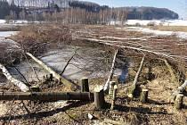 Bez povolení kdosi  vykácel 384 stromů u Zdoňovského rybníka, z toho 117 stromů mělo obvod kmene větší než 80 cm.