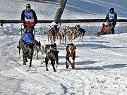 17. ročník saňových závodů psích spřežení v Janovičkách.