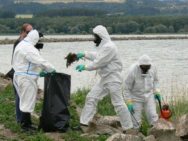 """Hasiči v ochranných kombinézách sbírají mrtvá těla racků na dělící hrázi """"východočeského moře"""""""