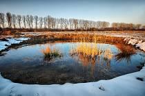 PRŮZKUM JOSEFOVSKÝCH LUK ukázal, že zavlažování a další ochranářské aktivity do parku přilákaly nejen ptáky, ale i mnoho jiných skupin živočichů.