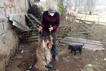 O ovci a jehně přišel i Štefan Szabo.