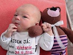 VIKTORIE RESLOVÁ poprvé vykoukla na svět 30. října 2016 ve 12.37 hodin, vážila 3190 g a měřila 48 cm. S rodiči Michaelou a Petrem jsou z Náchoda. Na sestřičku se těšil i devítiletý bráška Daniel.