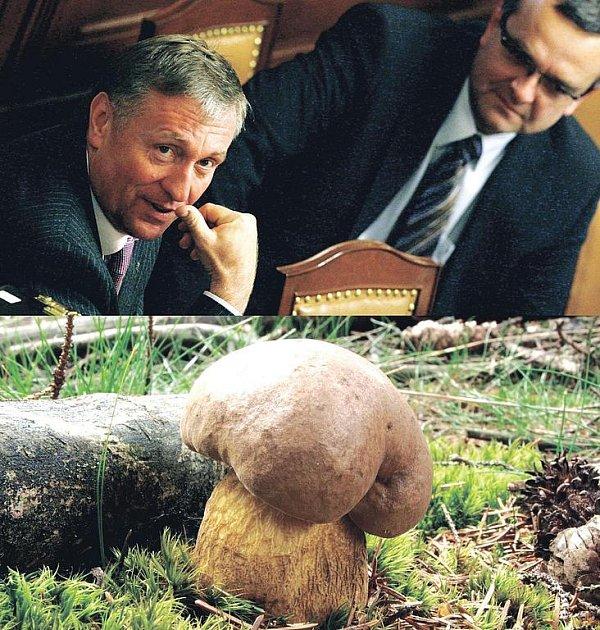 Čeští politici a houby jedno jsou?