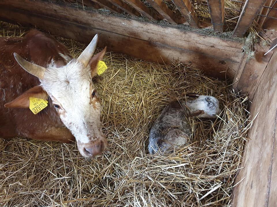 Letošní mláďata na farmě Wenet v Broumově.