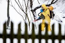 V polském městečku Kudowa Zdrój, které se nachází jen kousek od Náchoda, se objevil virus ptačí chřipky.