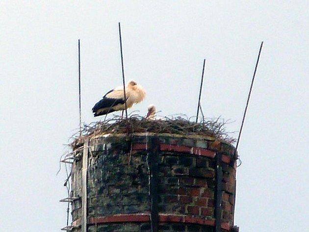 Na začátku března ornitologové umístili na komín v Martínkovicích umělé hnízdo pro čápy.