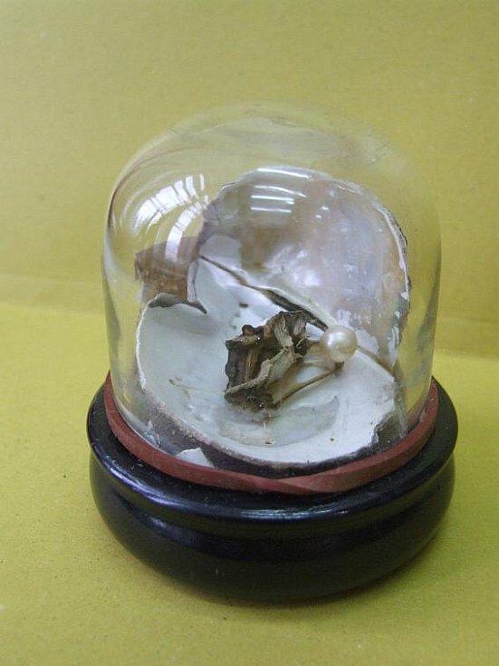 Ve sbírce nechybí ani perlotvorka říční a pravá mořská perla.