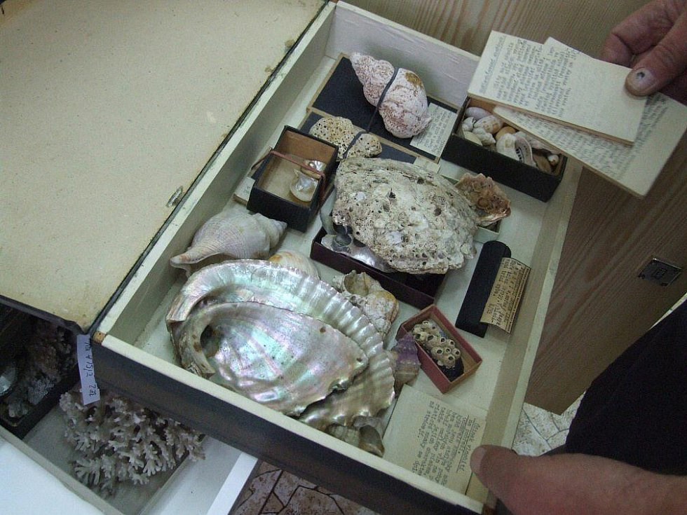 Zásuvky s mořskými přírodninami.