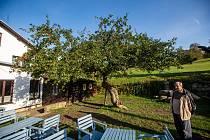 Strom roku v Machovské lhotě u hospody u Lidmanů, říjen 2020