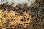 Češi jsou vášnivými včelaři. Nákup místního medu je totiž to nejlepší, co se dá udělat pro přírodu.