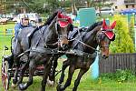Závody světového poháru koňských spřežení v Polici nad Metují.