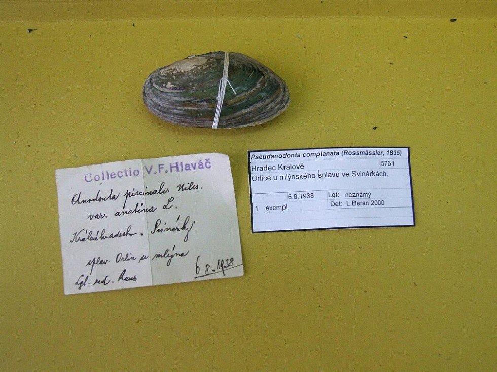 Vlevo původní katalogizační lístek sladkovodního měkkýše, vpravo současný…