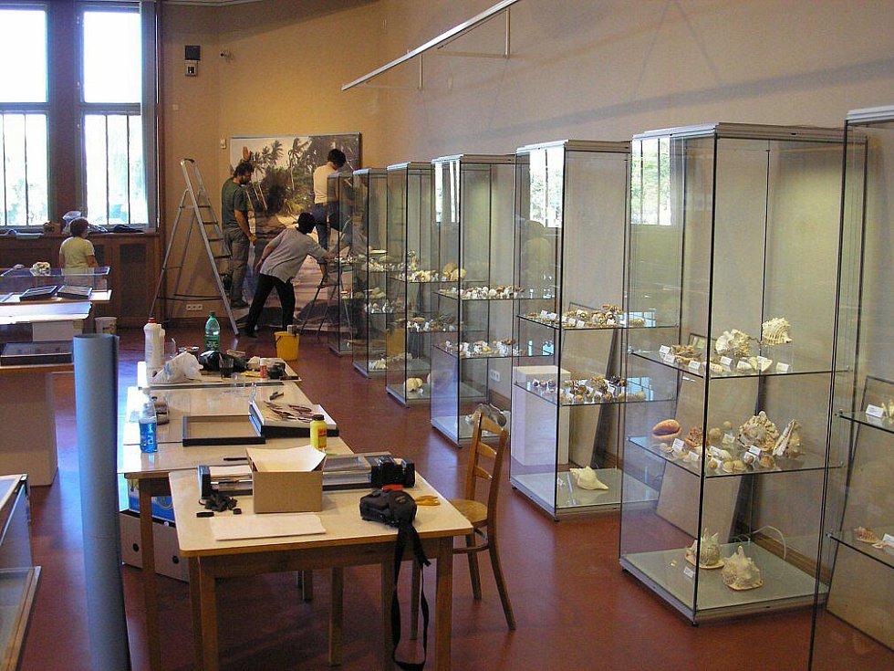 Příprava na výstavu Krása tropů, která královéhradecké veřejnosti prezentovala i mořské přírodniny.