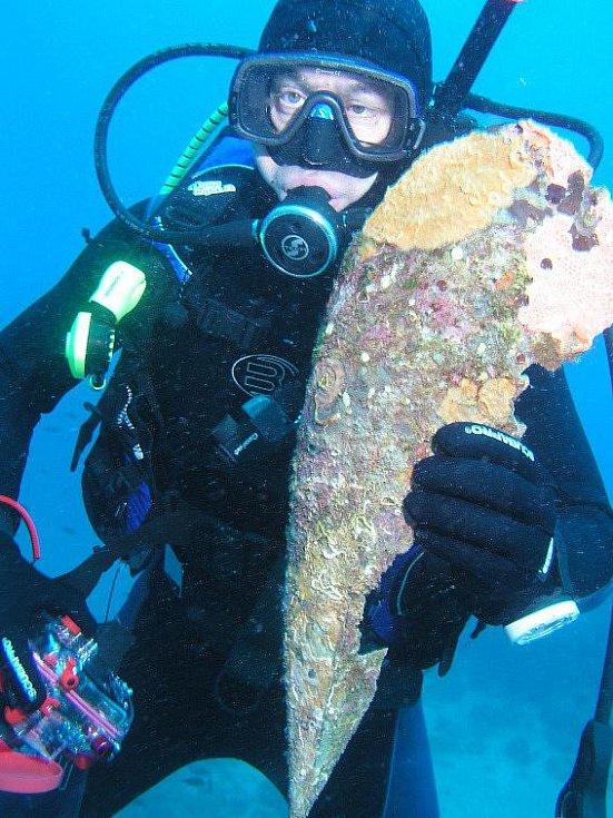 Druhý největší druh mořského měkkýše na světě žije překvapivě i v blízkém Jadranu. Z tohoto moře pochází i snímek, kdy potápěč stoupá na hladinu s lasturou kyjovky. Její délka může být více než jeden metr.