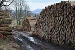 Vyrovnané pyramidy pokácených kmenů pod stolovou horou Ostaš. A to je teprve začátek nezbytné těžby kůrovcem napadených stromů.