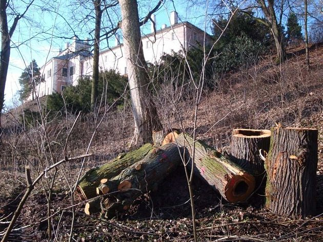 BROUKOVIŠTĚ na okraji zámeckého parku. Kmeny stromů poskytují domov řadě vzácných brouků.