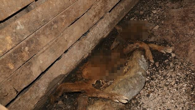 Policisté objevili více jak 70 kusů uhynulých zvířat  v různých stádiích rozkladu.