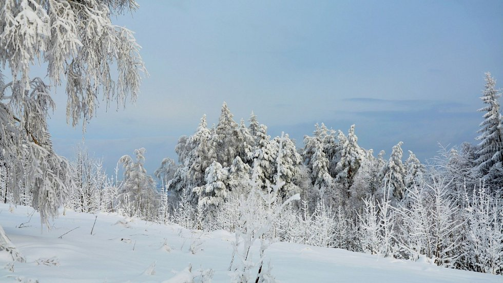 Zimní příroda objektivem Zdeňka Dočkala.
