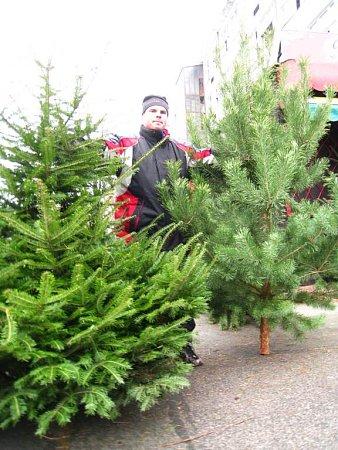 Vánoční stromečky jdou na odbyt.