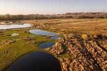 Některé nové pozemky se stanou součástí pastviny divokých koní a praturů, kteří ornitologům pomáhají s údržbou pestrých luk. Pastvou a rozrušováním povrchu vytvářejí ideální podmínky pro hnízdění mokřadních ptáků a pomáhají tak řešit situace, se kterými s