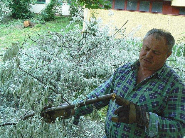 Anton Meisnér, pracovník Technických služeb Police nad Metují, nám ukazuje zvláštnosti spadlého stromu rakytníku, jehož větve spolu s kolegou Petrem Jirmanem rozřezávali a připravovali k odvozu.