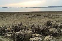 HLADINA Rozkoše klesla o čtyři metry a přehrada, které se přezdívá východočeské moře, odhalila své dno.