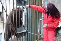Medvědi na náchodském zámku.
