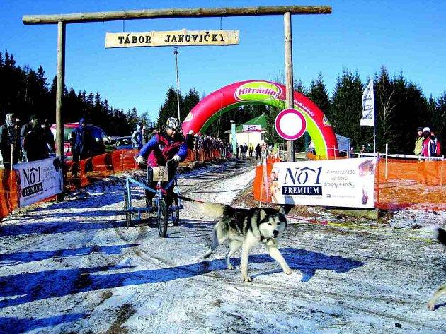 Zatímco loni  museli pořadatelé kvůli naprostému nedostatku sněhu sáhnout ke kárám, tak letos už se musheri a jejich psi dočkají saní.